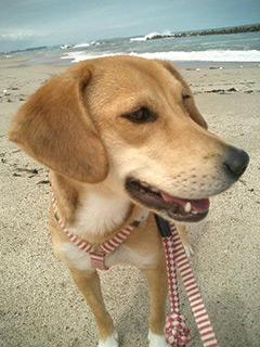 成犬アンちゃんの写真