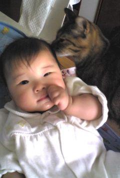 猫と赤ちゃんの写真1
