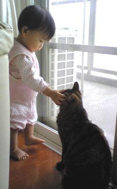 猫と赤ちゃんの写真2