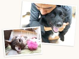 犬の室内飼育