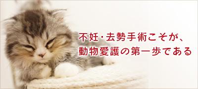 不妊・去勢手術こそが、動物愛護の第一歩である