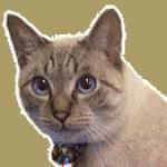 cat-atom-missing