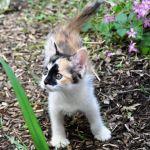 x-cat-00701-mickey-00.jpg