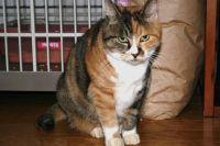 x-cat-00740-chanpon-00.jpg