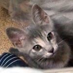 x-cat-00761-ori-00.jpg