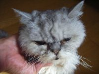 x-cat-00793-pond-00.jpg