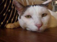 x-cat-00858-kamekichi-00.jpg