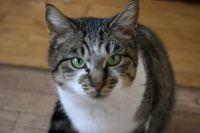 x-cat-00859-maru-00.jpg