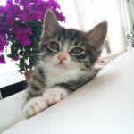 x-cat-00940-ruche-00.jpg
