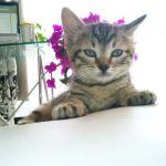 x-cat-00941-macaron-00.jpg