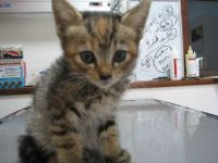 x-cat-01002-michael-00.jpg