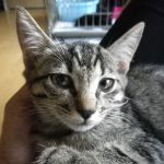 x-cat-01016-fuu-00.jpg