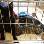 x-cat-01019-kuromame-00.jpg