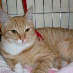 x-cat-01072-hiromi-00.jpg