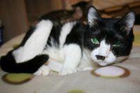 x-cat-01093-hibari-00.jpg