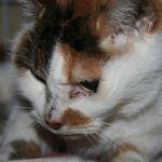 x-cat-01094-tamao-00.jpg