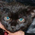 x-cat-01155-zofu-00.jpg