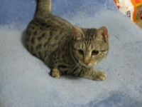 x-cat-01173-ranka-00.jpg