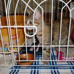 x-cat-01175-chiychan-00.jpg