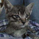 x-cat-01190-en-00.jpg