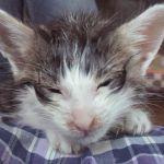 x-cat-01191-enisi-00.jpg