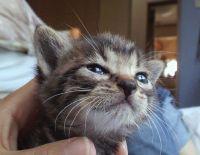 x-cat-01192-ten-00.jpg