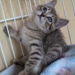 x-cat-01193-dorothy-00.jpg