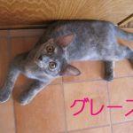 x-cat-01200-grace-00.jpg