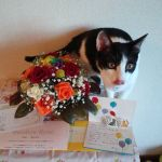 x-cat-01202-shin-00.jpg