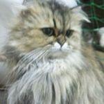 x-cat-01333-taiga-00.jpg