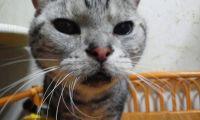 x-cat-01363-amemiya-00.jpg