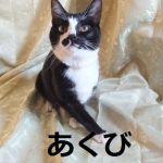 x-cat-01377-akubi-00.jpg