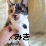 x-cat-01379-miki-00.jpg