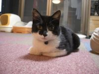 x-cat-01381-rycky-00.jpg