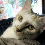 x-cat-01443-yuki-00.jpg