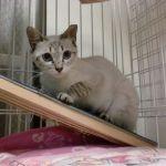 x-cat-01468-ryou-00.jpg