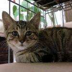 x-cat-01486-kaname-00.jpg