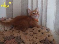 x-cat-01494-riku-00.jpg