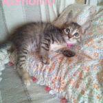 x-cat-01495-komomo-00.jpg