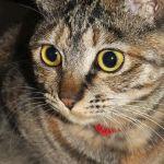x-cat-01496-ruby-00.jpg