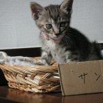x-cat-01498-sango-00.jpg