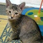 x-cat-01499-dia-00.jpg