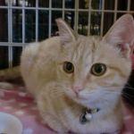 x-cat-01533-kotatsu-00.jpg