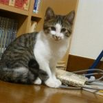 x-cat-01544-tiger-00.jpg