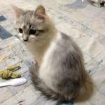 x-cat-01555-umi-00.jpg