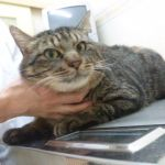 x-cat-01584-tora-00.jpg