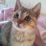 x-cat-01588-fukunosuke-00.jpg