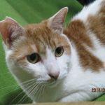 x-cat-01617-uzura-00.jpg