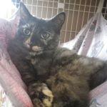x-cat-01635-oboro-00.jpg