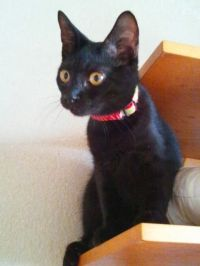x-cat-01666-kuromitsu-00.jpg